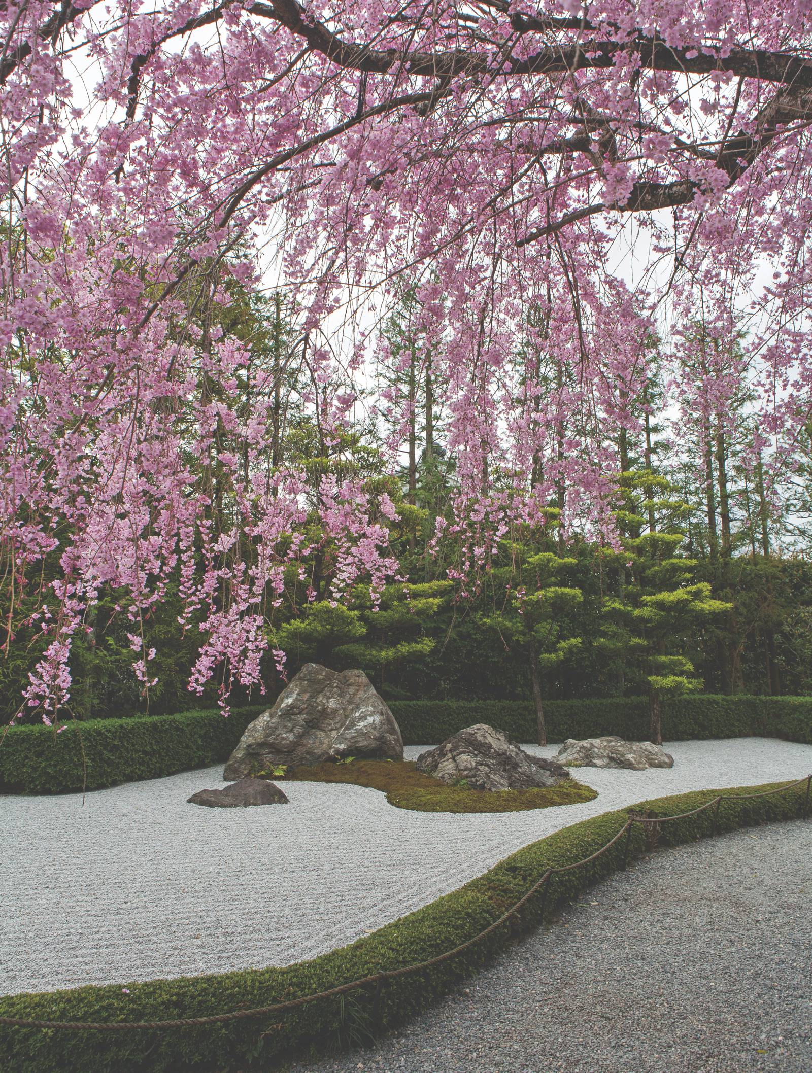 complete with holed out circle in obligatory millennial pink this isnt just a book for keen gardeners its a source of art and design ideas - Japanese Garden Cherry Blossom Paintings