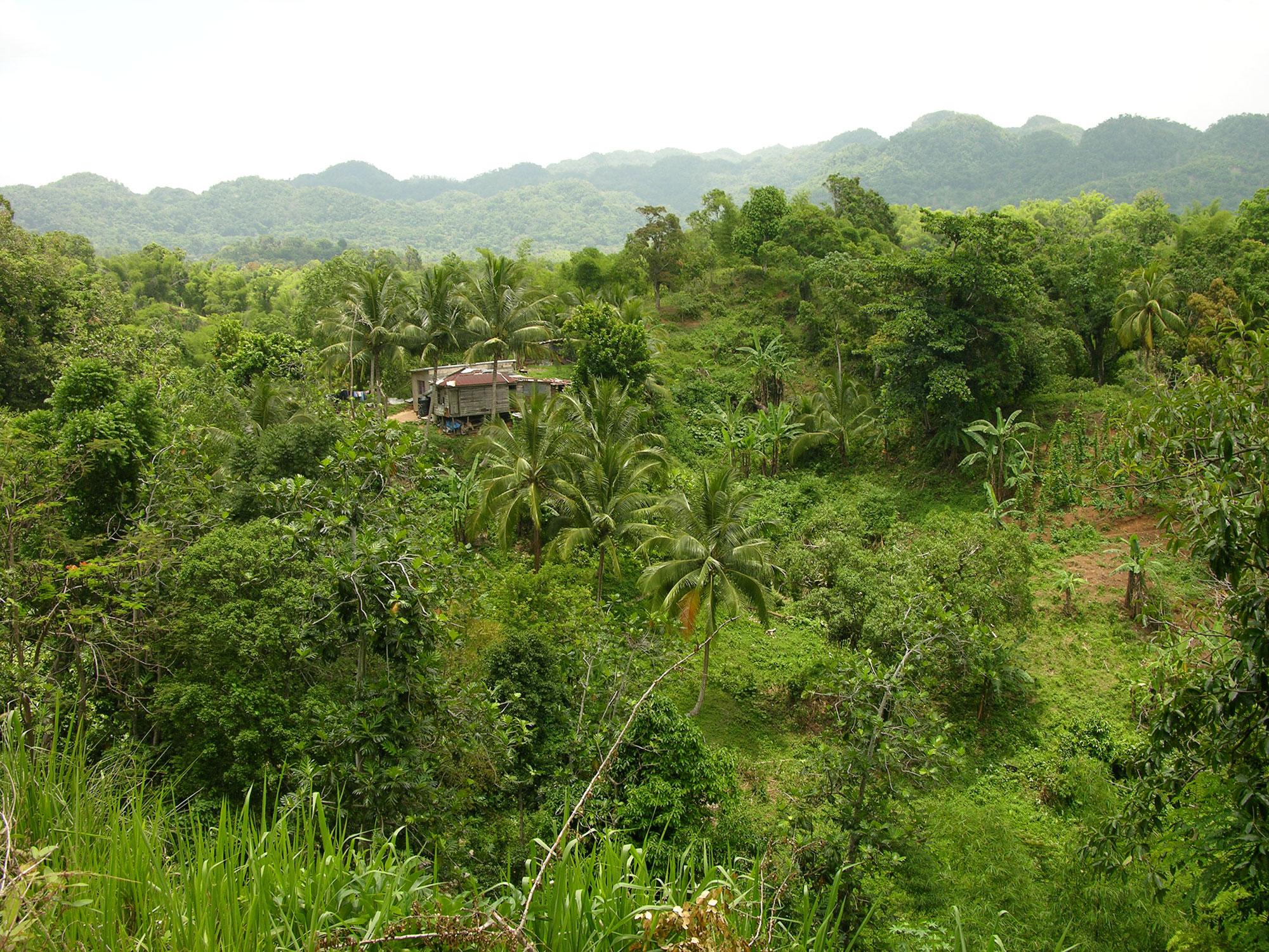 Outdoors sex spain jungle legal